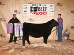 Res Angus Steer